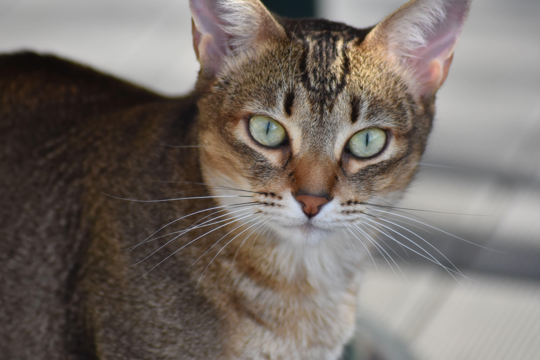 Katze Lilly von SLP Texting