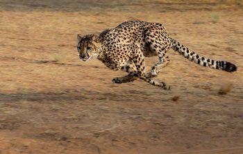 Tiere-in-der-Werbung-Bewegung-SLP