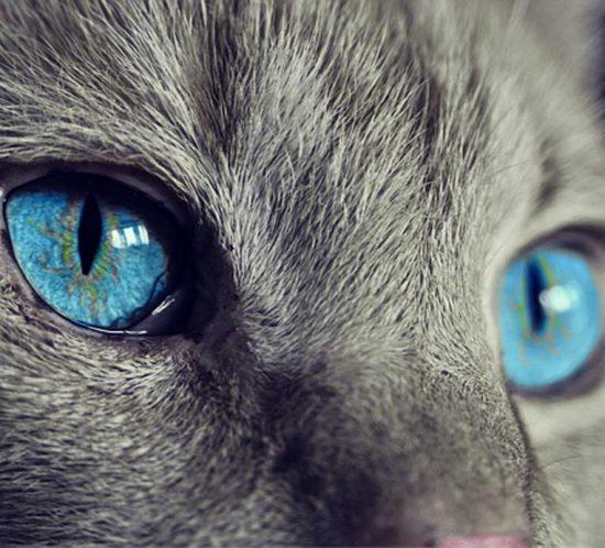 Katze-in-der-Werbung-SLP