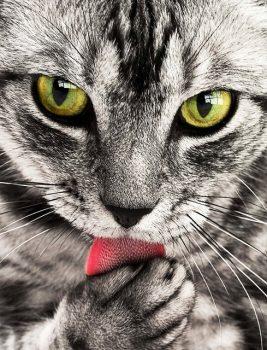 Katze-in-der-Werbung-2-SLP