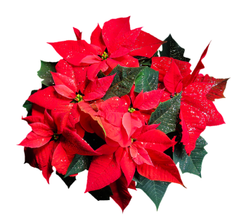 Vorlage-Weihnachtsbrief-SLP-3