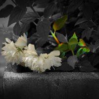 Blumen_Lichtbrechung_SLP